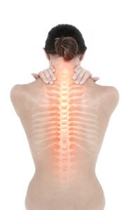 female spine and bone density
