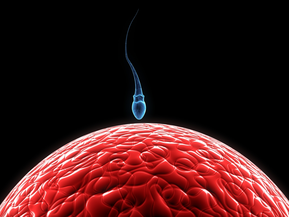 What Makes Sperm Stronger?