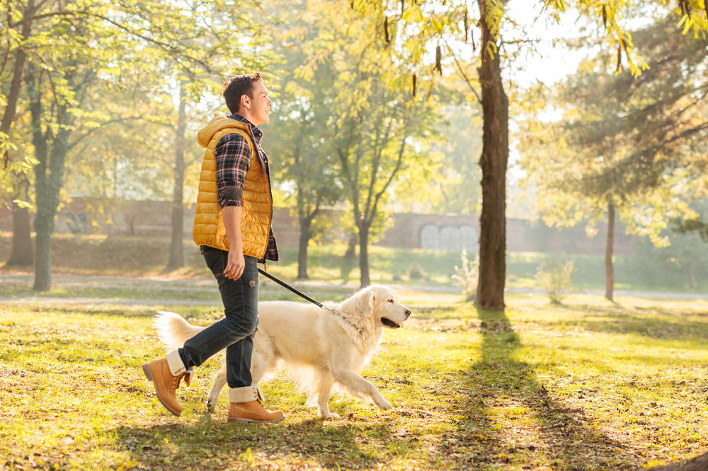 going for a walk in the park with dog