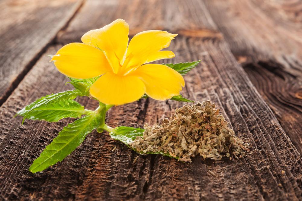 damiana flower