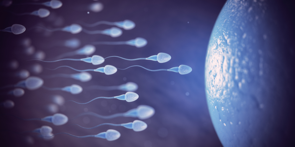sperm cells swimming to egg