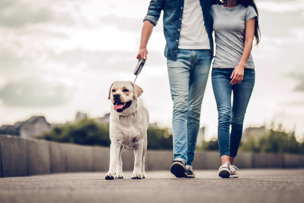 couple walking the dog