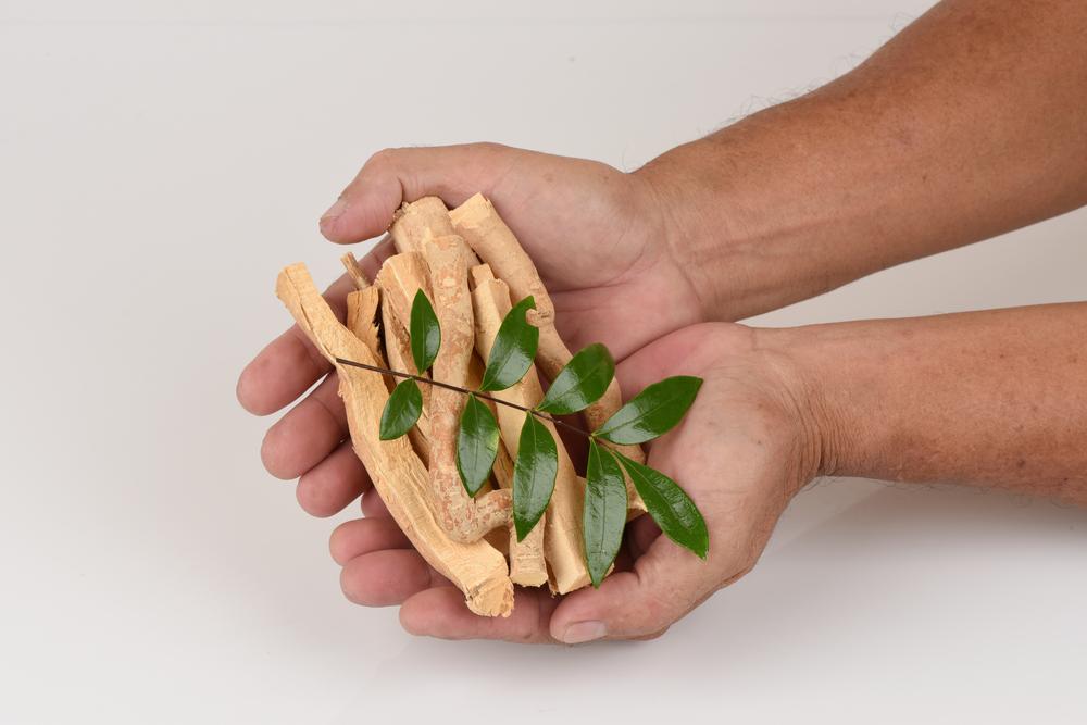 tongkat ali leaves and root