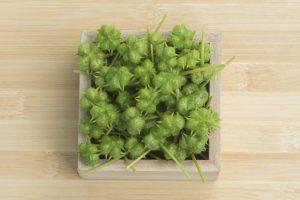 Tribulus Terrestris fruits