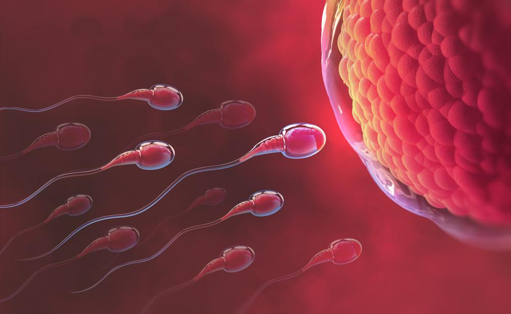 What Factors Affect Sperm Quality?