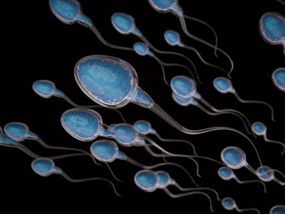 sperm cells swimming