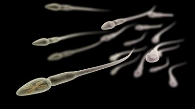 sperm cell with x chromosome